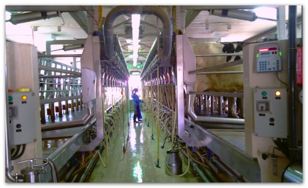 Dairy Platform Development area